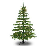 Clearance - 4 - 6 ft. Christmas Trees