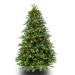 Slim Alaskan Deluxe Fir Christmas Trees - Category Image