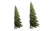 Half & Wall Mount Trees